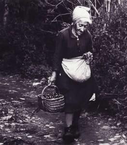 raccolta castagne