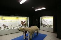 Varenna - Museo Ornitologico Scanagatta